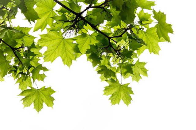 Alberi da giardino una guida alla scelta - Migliori alberi da giardino ...